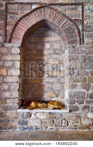 A stray dog sleeps in a blinded window of Hagia Irene Church Istanbul Turkey