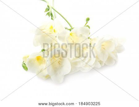 Beautiful freesia flowers on white background
