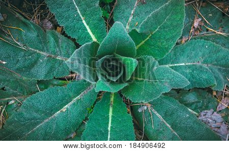 Wild stinging plant background in nature with night effect