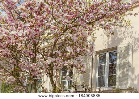 Beautiful Residential Architecture And Gardens In Spring On The Southern Wine Route Germany
