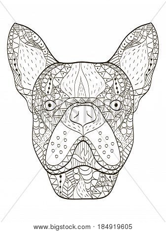 Bulldog head animal coloring book for adults vector illustration. Anti-stress coloring for adult. Zentangle style puppy. Black and white lines dog. Lace pattern