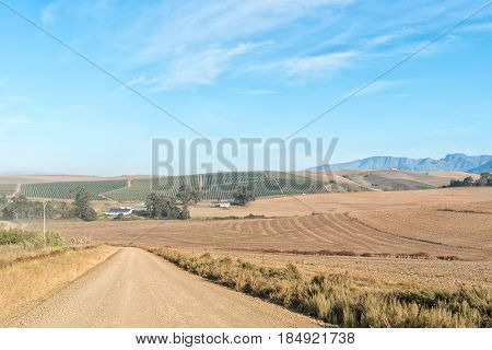 A farm landscape on the road between Riviersonderend town and Greyton in the Western Cape Province