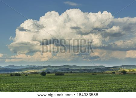 Countryside Scene With Wheatfield