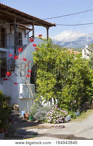 house with red flowers and blue sky on sunny spring day in Greek town of kardamili on peloponnese with snow covered mountain in the background