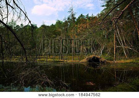 Spring wetland pond and forest overturned trees landscape