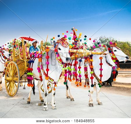 MANDALEY, MYANMAR-MARCH 5, 2017: Burmaneses in cart with white bulls at Shinbyu (pabbajja) ceremony of Theravada Buddhism near Mandaley on March 5, 2017, Mandaley. Myanmar. (Burma)