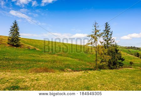 Pine Forest In Summer Landscape
