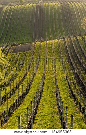 Spring landscape with a vineyard. South of Moravia Czech Republic.