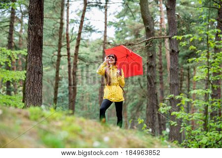 Young woman in yellow raincoat hiking with binoculars and red umbrella in the pine forest