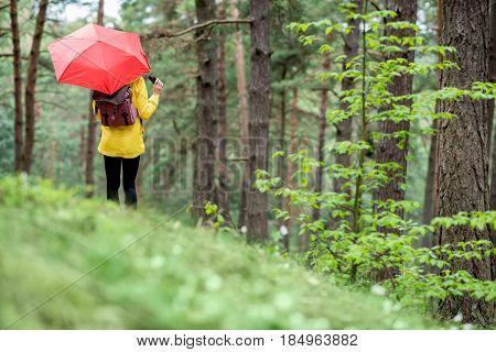 Young woman in yellow raincoat standing back with red umbrella in the pine forest