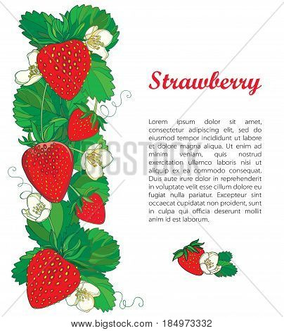 Vector template with outline Strawberry, vertical border with ornate red berry, flower and green leaves isolated on white. Fruit elements with ripe strawberry in contour style for summer design.