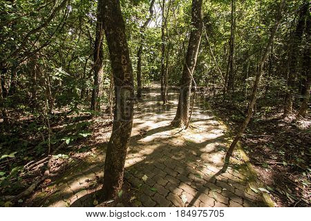 Brick Way Into A Forest In Brasilia, Brazil