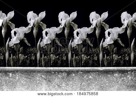 Photomontage of horizontal wall with lilies in monochrome.