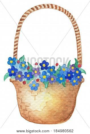 Watercolor floral arrangement. Forget-me-not flower hand-drawn illustration. Wicker basket with blue forget-me-not flowers in watercolors. Spring floral decor for wedding card.