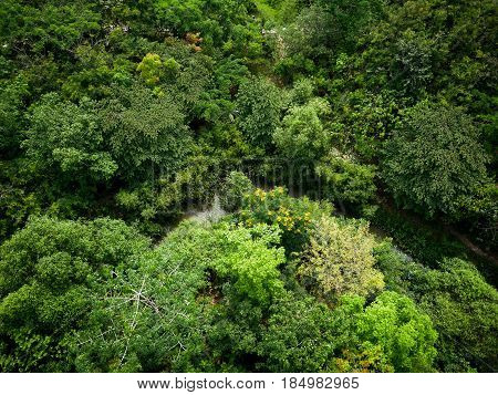 Top view on green forest with river.