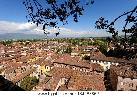 Aerial view of the small medieval town of Lucca Toscana (Tuscany) Italy Europe. View from the Guinigi tower