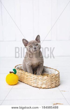 Kitten Gray Breed, The Burmese Is Sitting In A Wicker Basket. Next Toy Crocheted In The Form Of Frui