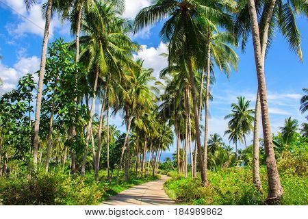 Tropical landscape with palm tree road. Palm road in tropical island. Countryside of Philippines. Beautiful nature on exotic island. Palm tree forest path. Summer vacation tour. Sunny day in tropics