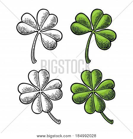 Good luck four and three leaf clover. Vintage color and black vector engraving illustration for info graphic, poster, web. Isolated on white background.