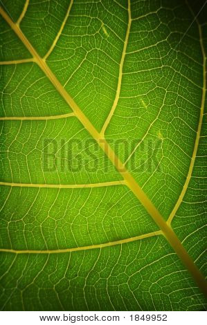 A macro shot of a leaf section green and healthy poster