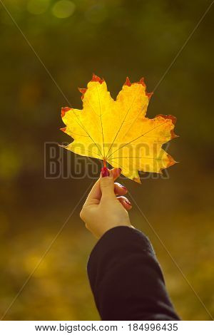 Girl holding maple leaf in autumn park