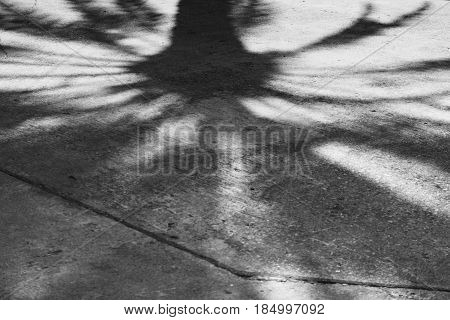 the shadow of deciduous tree on the sunny pavement
