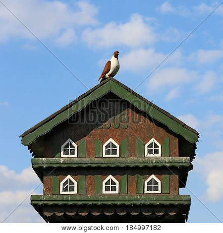 Nice green dovecote for pigeons in the countryside.