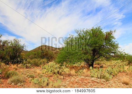 Scenic mountain view in Colossal Cave Mountain Park in Vail, Arizona, USA near Tucson.