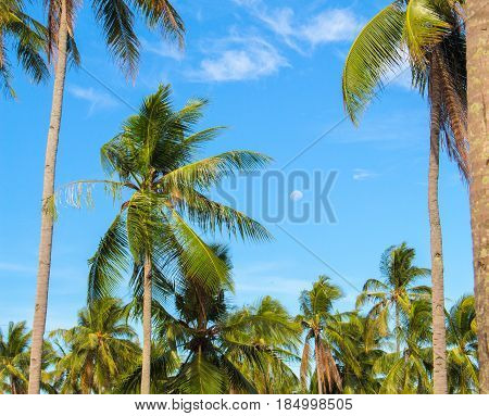 Paradise landscape with coco palm trees. Exotic place view through palm tree silhouettes. Palm tree forest under sunlight. Peaceful holiday island image for poster or card. Coconut palm leaves banner