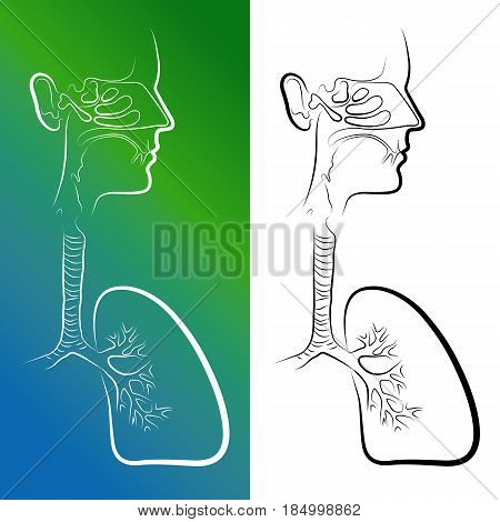 Sketch of Respiratory System Organs. Vector Illustration. Isolated on white background