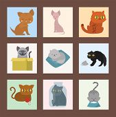 Cute cats cards character different pose funny animal domestic kitten vector illustration. Pet feline portrait fluffy young adorable mammal whisker pussy cartoon small kitty. poster