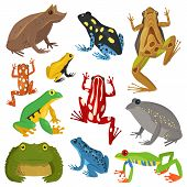 Frog cartoon tropical animal cartoon nature icon funny and isolated mascot character wild funny forest toad amphibian vector illustration. Graphic ecosystem croaking hop drawin poster