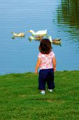 A toddler girl back turned to camera watching 4 ducks. poster
