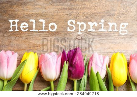 Flat Lay Composition Of Beautiful Flowers And Text Hello Spring On Wooden Background