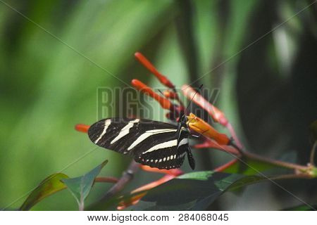 Garden With A Zebra Longwing Butterfly With His Wings Spread.