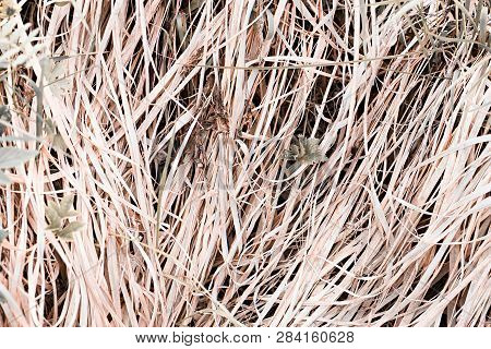 Dry Meadow Yellow-gray Grass Backgrounds For Closeup