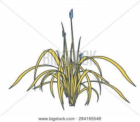 Outlined Reed And Water Plants In Mobile Phone. Yellow Isometric Clump Of Reed Growing In Pool, Lake