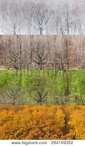 Collage From Panoramic Views Of Forest In Four Divisions Of The Year (winter, Spring, Summer, Autumn