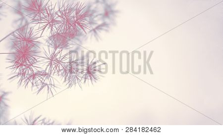 One Red And Blau Asparagus Branch Isolated On The Pastel Beige Background