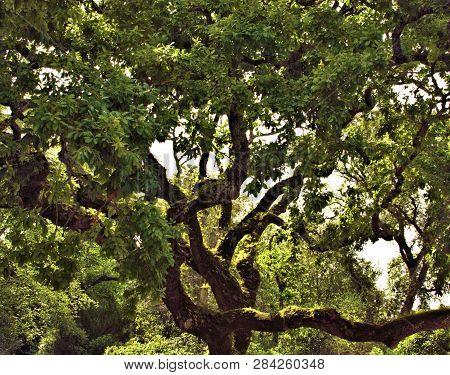 Beautiful Tree Under The Sunlight In Summer