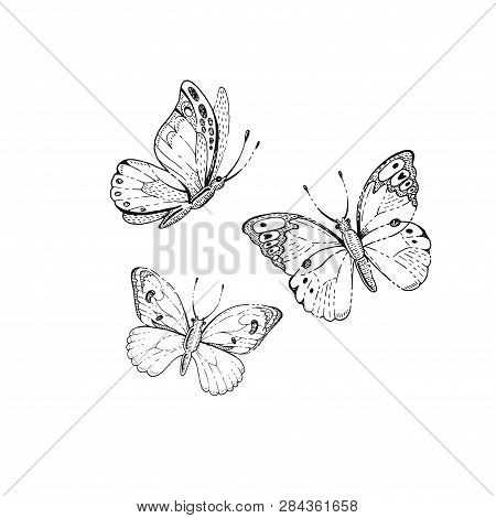 Spring, Summer Butterfly Art. For Tattoo, Coloring Book, T-shirt Print, Wadding Invitation, Mother S