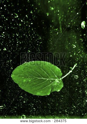 Green Leaf In Water 1