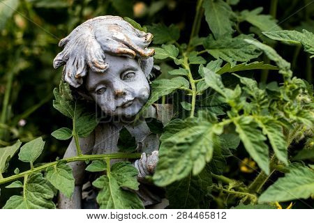 Tomato Garden With Girl Statue And Vivid Green Leaves