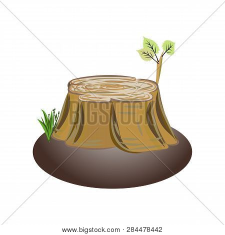 Alder Tree Stump With Brench And Leaves. Nature Landscape With Alder Stump Tree,.