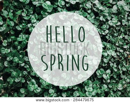 Hello Spring Text Sign On Green Grass, Leaves Or Plants. Spring Fresh Image Of Grassland. Earth Day