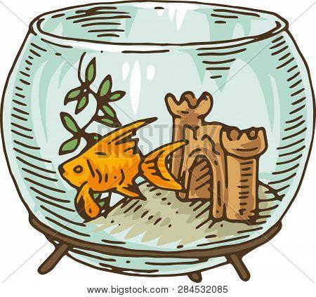 Round Glass Fishbowl With Goldfish, Castle And Algae. Isolated On White