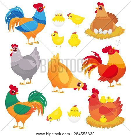 Cute Domestic Chicken. Farm Breeding Hen, Poultry Rooster And Chickens With Chick. Hens Cartoon Vect