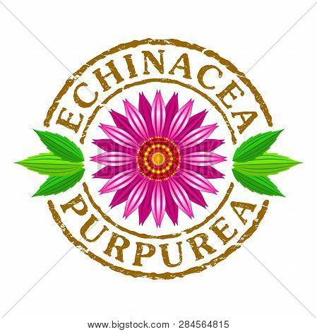 Vector Letter Stamp With Echinacea Purpurea Flower. Vector Illustration Of Echinacea Purpurea Bloomi