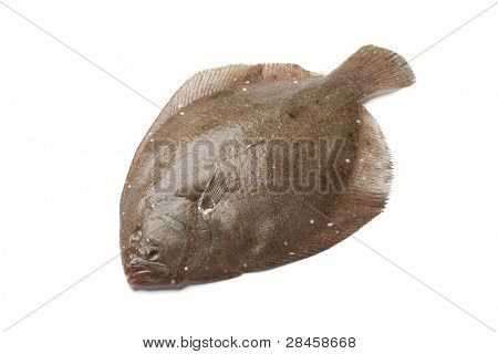 Whole single  Brill fish on white background