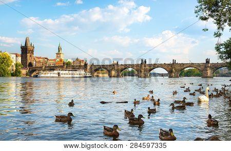 Swan And Ducks On River Vltava Near Charles Bridge In Prague